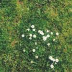 """5 Useful """"Weeds"""" Growing in Your Lawn"""