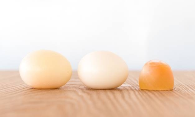 Why is My Chicken Laying Soft or Shell-less Eggs?