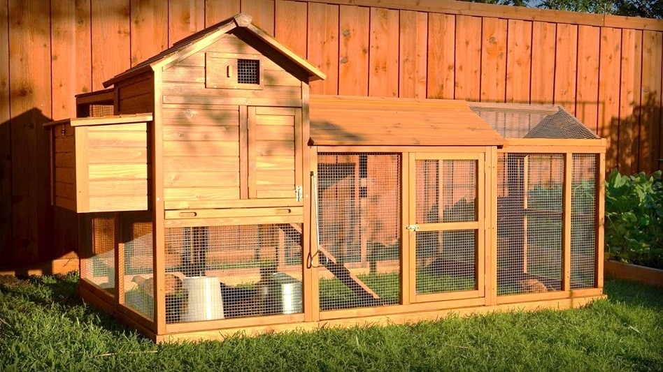 The Best Backyard Chicken Coops For Small Flocks in 2020 ...